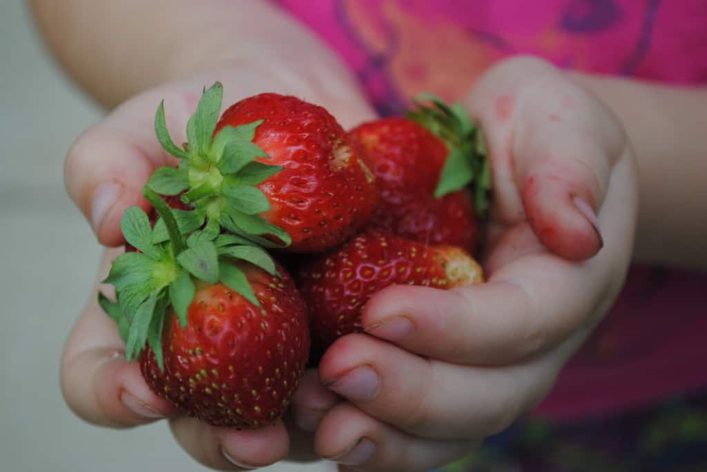 hands full of strawberries