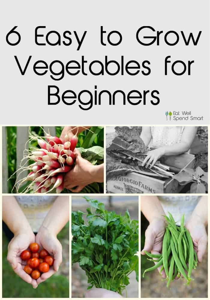 Easy to grow vegetables for beginners.